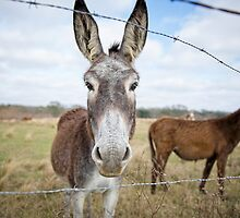 Humble Little Burro by Bonnie T.  Barry