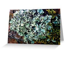 Lichen # 43 Greeting Card