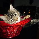 Kitten in a Basket by Susan S. Kline