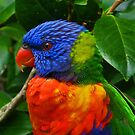 Rainbow Lorikeet Deep In Thought by Margaret Saheed