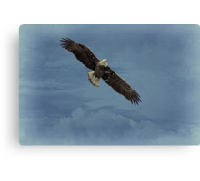 Eagle In The Clouds Canvas Print