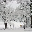 snow and lots of it! by Penny Rinker