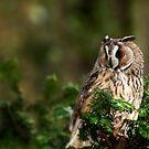 Owl in the tree by Matt Hurrell