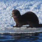 Mink with crawdad by Alex Call