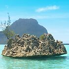 Coral rock, Mauritius by JenniferLouise