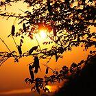 First Light by Vipul Shah