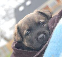Coco the Puppy by Europebound