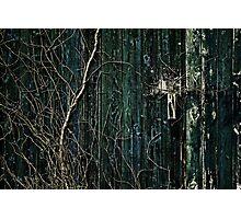 Creeper Photographic Print