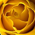 Yellow Rose by Kawka