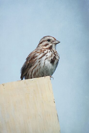 Female Purple Finch ~ by Renee Blake