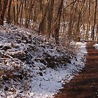 Winter Hike by Sandy Woolard