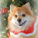 Merry Christmas From Maverick Little Fox by Dawne Dunton