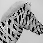 Zebra by Double-T