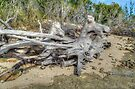 The Beach Horses on New Providence Island, The Bahamas by 242Digital