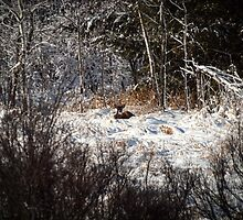 Bedded Buck in a Blanket of Snow by Thomas Young