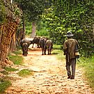 Working Cambodia by Steven Powell