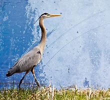 Great Blue Heron by michelsoucy