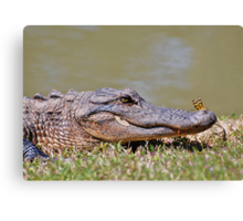 The Lazy Gator & The Dragonfly Canvas Print