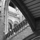 Natural History Museum, London by Karen Hood