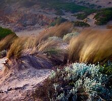 Early Evening on the Dunes by Alex Fricke
