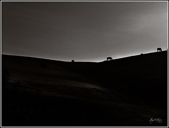 Cows on a Ridge - Monochrome Study by Wayne King