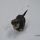 Romping In The Snow by Lorelle Gromus