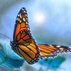 On Gossamer Wings by Leann  Rardin
