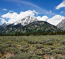 Grand Tetons and Brush by Michael Kirsh