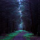 Northumberland Forest by Stafnmar