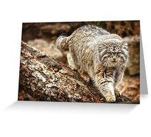 Pallas Cat in High Def Greeting Card