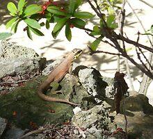 Lizard by jredbubble