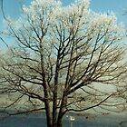 Winter Tree Over Cayuga Lake by Nancy Aranda