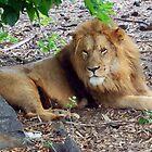 King of the jungle by JenniferLouise