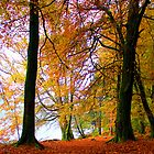Autumn Woods by dombrown