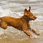 Spaniel in Sea by Kawka