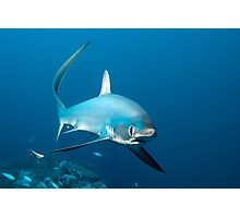 The Whip-Fin Photographic Print