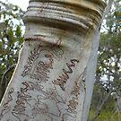 Scribbly Wrinkle: South Bruny Island, Tasmania by linfranca