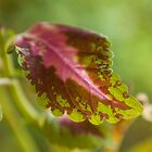 Pink Leaf by James Farnan