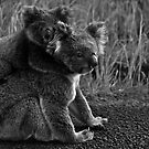 Koala with Joey.  by jannina
