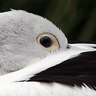 I'm Watching You! by PenguinSands