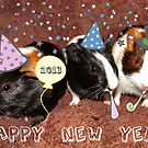 Happy New Year from Tia, Rum and Bailey!! by Michaela1991