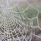 Frosty Web  by hannahk81