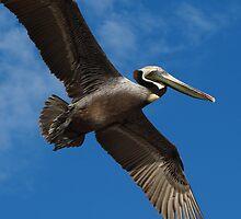 I'm Flying Like A Bird Through The Sky - Estoy Volando Como Un Pajaro En El Cielo by Bernhard Matejka
