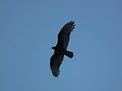 Turkey Vulture Flying In Iowa Sky 2 by Deb Fedeler