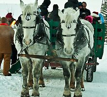 Horse Drawn Sled December 2012 Heritage Park, Calgary, Alberta by Laurast