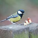 Great Tit by Imager