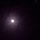 Moonlight through the Trees by CreativeEm