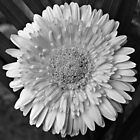 Flower (Black & White) by tropicalsamuelv