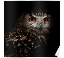 Eagle Owl with Orange Eyes Poster