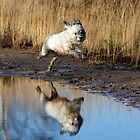 Macy Reflected by Christopher Lloyd